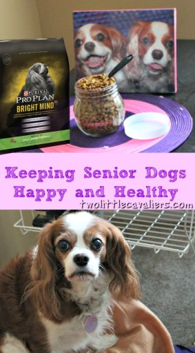 Keeping Senior Dogs Happy and Healthy #BrightMind