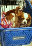 Shopping at PetSmart for #BayerExpertCare Products