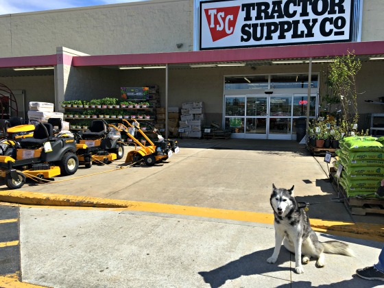 Whisper at Tractor Supply