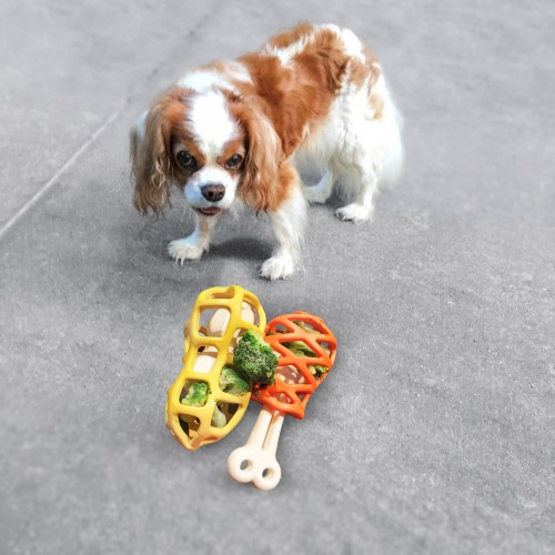 Cavalier King Charles Spaniel  with the Petmate Hol-ee Gourmet