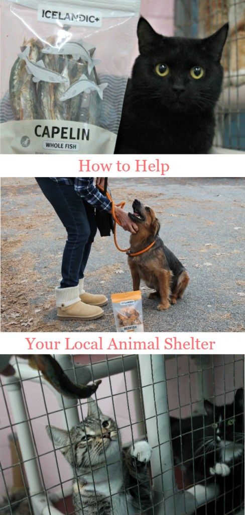 How to Help Your Local Shelter