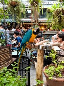 koloroa papuga