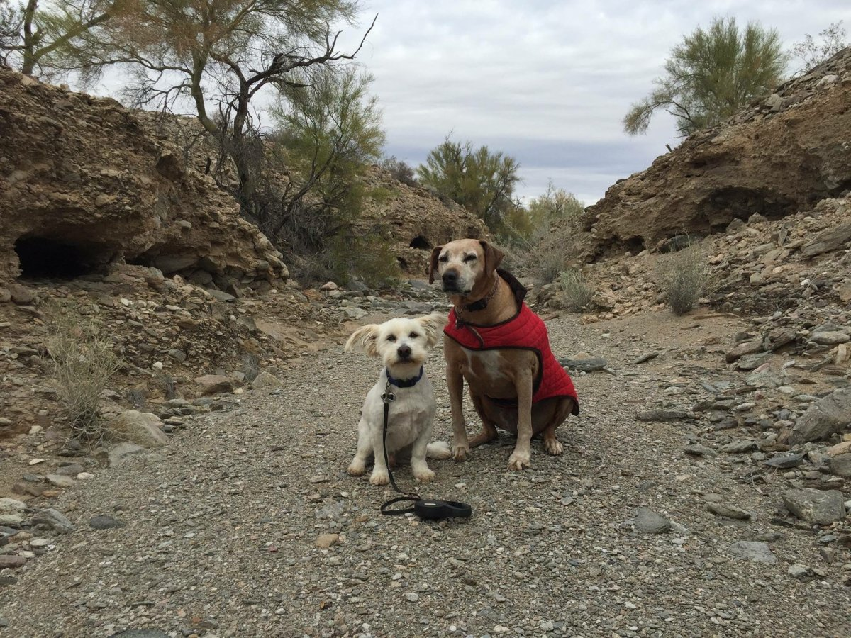 How to Care of You and Your Furbabies in the Desert