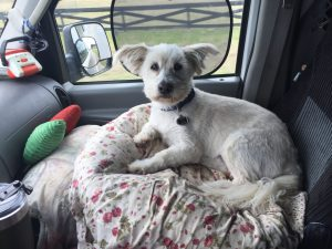Photo of Bentley in Front Seat