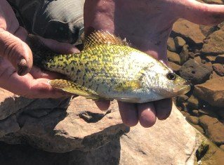 avery lake crappie