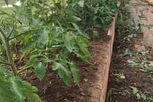 How to Fertilize an Organic Garden for Success
