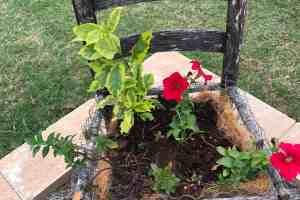 Expert How-To; Build a Gorgeous Chair Planter