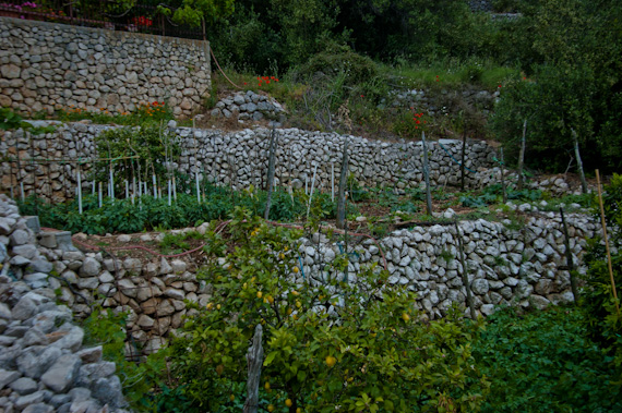Our apartment rental in Croatia: Stone Retaining Wall Vegetable Gardens