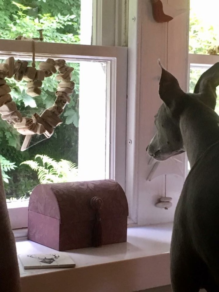 What Whippets Need- A Wish list for Whippets