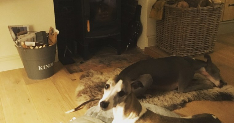 Days Out and Holidays with Dogs Archives - Two Plus Dogs