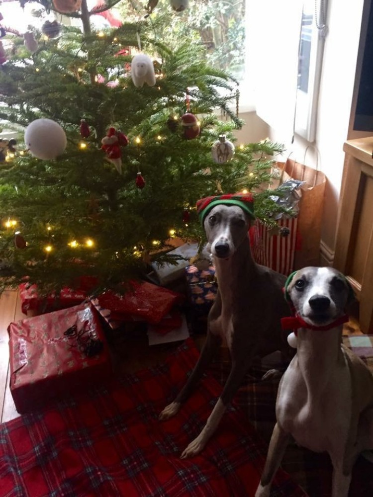 dog proofing your home at Christmas