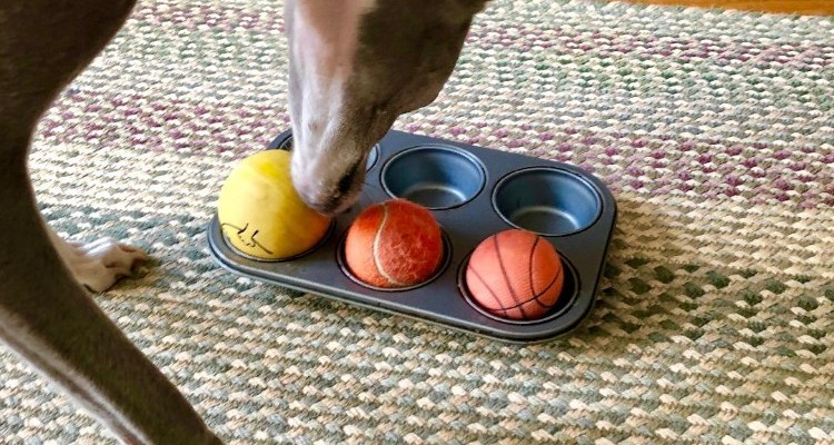 Mental Stimulation for Dogs- Ideas and Activities