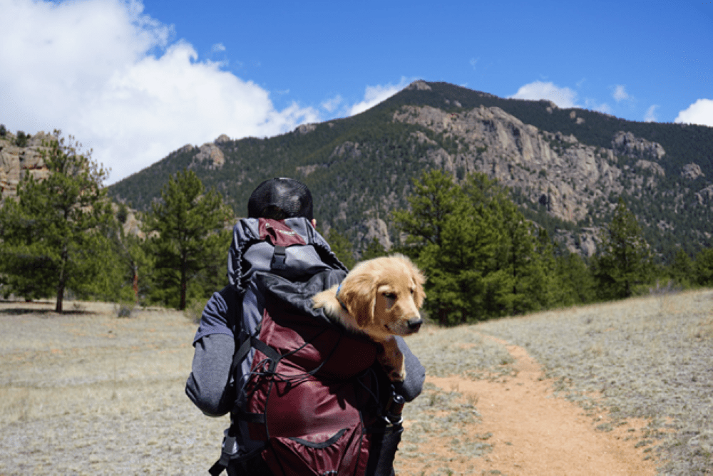 dog friendly holidays in the UK