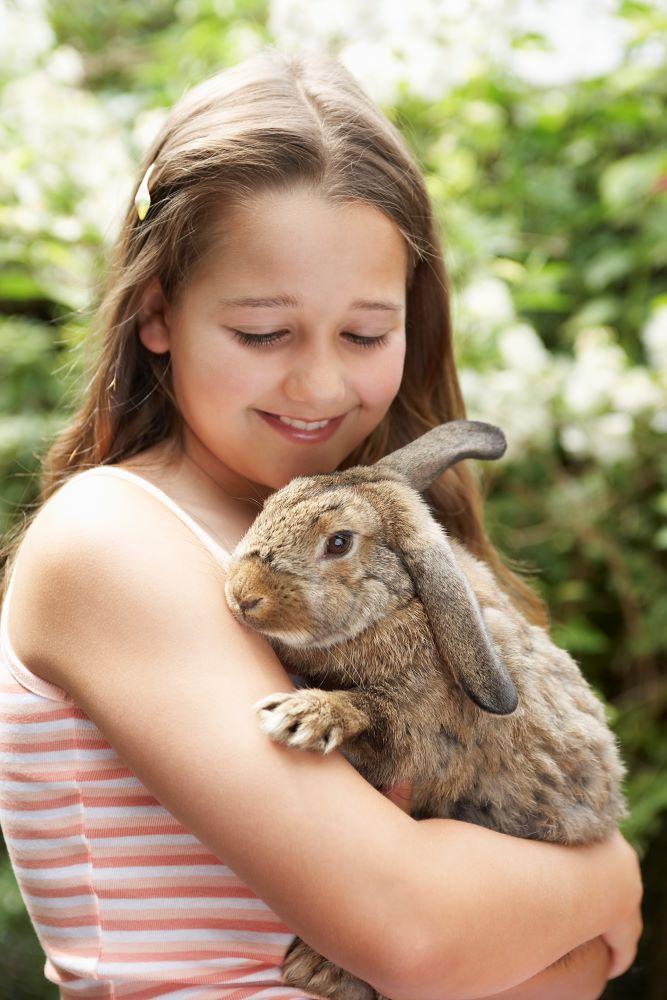 stroke rabbit