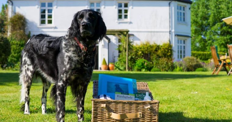 10 Dog Friendly Hotels in Devon