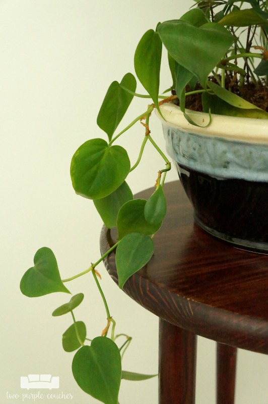 Build Wooden Plant Stand
