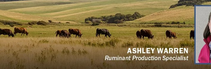 How to Manage Pastures Before Grazing with Ashley Warren, Ruminant Production Specialist