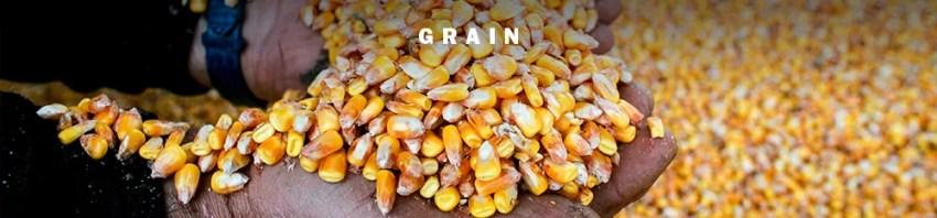 Grain Weathering the 2020 Storm