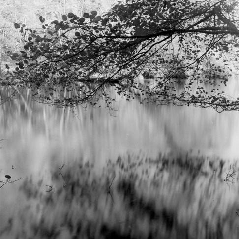 © Salvo Toscano