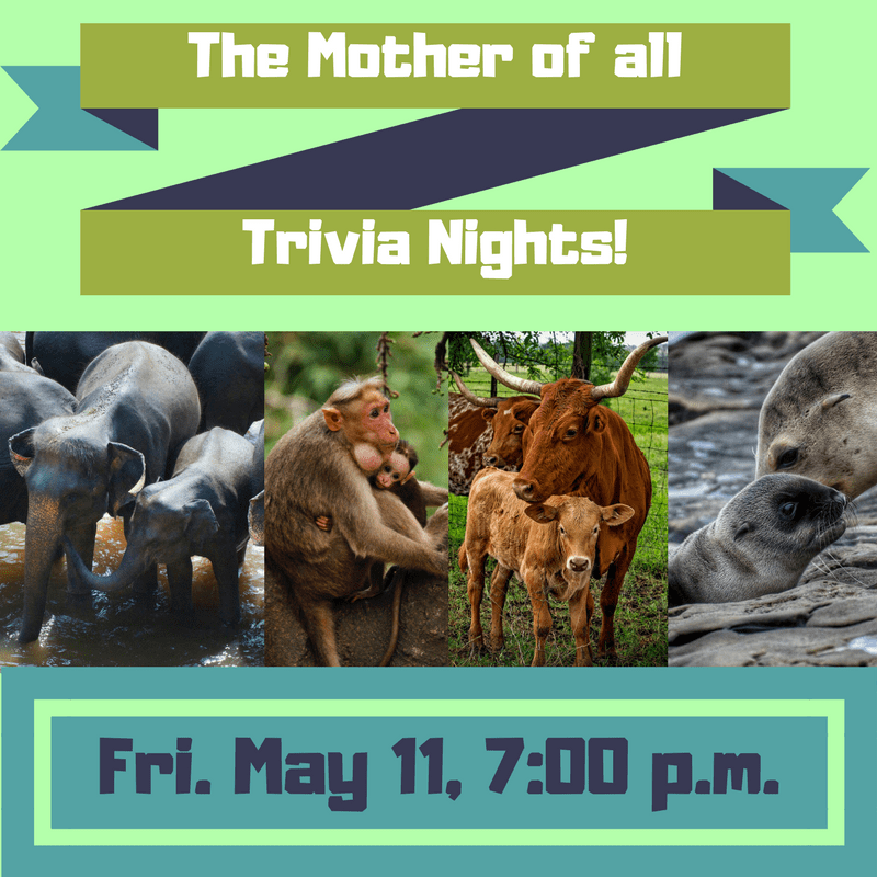 The Mother of All Trivia Nights