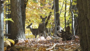 The Two River Times | To Control Deer, Colts Neck Urges More
