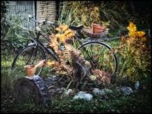 A garden feature
