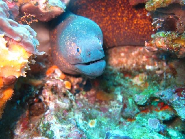 Moray eel in Nusa Penida