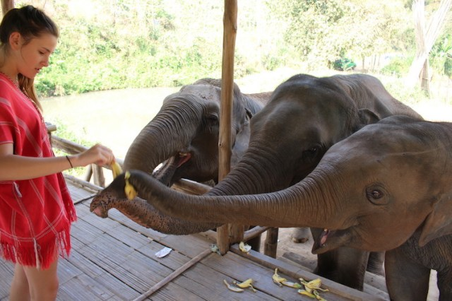 elephant-feeding-time-Ethical-elephant-sanctuary-Chiang-Mai-Two-Souls-One-Path