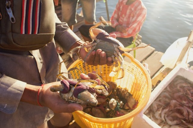Crab market, things to do in Cambodia