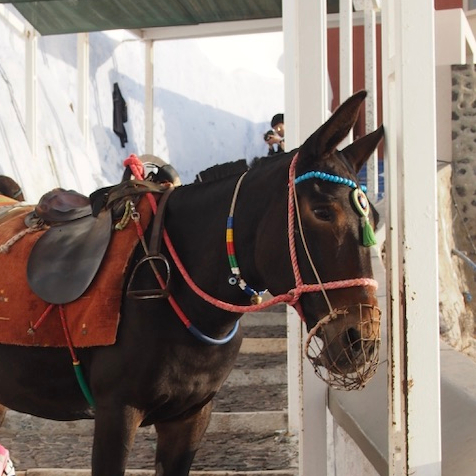 Off Peak Holiday Santorini Itinerary Travel Tips Fira Donkey Ride