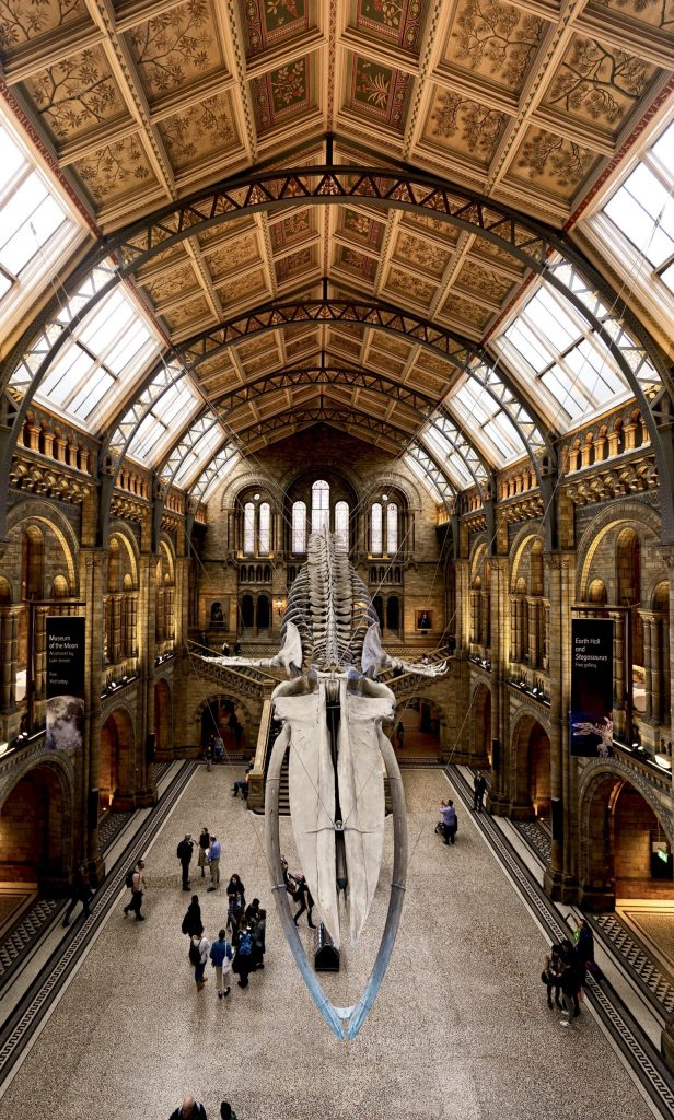 London Day Out Natural History Museum Blue Whale