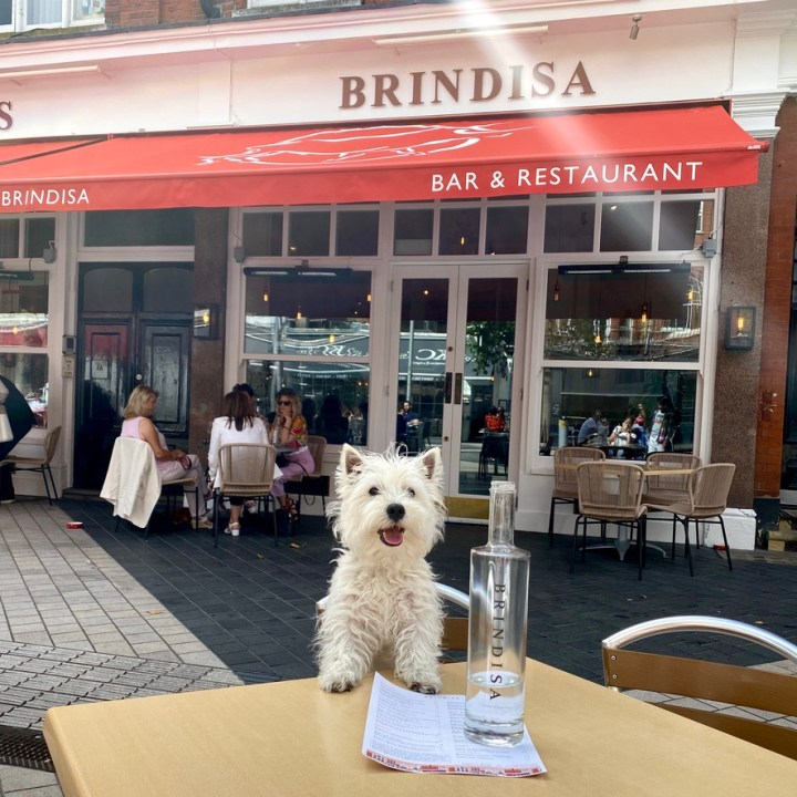 Tapas Brindisa Spanish Restaurant South Kensington Dog Friendly Al Fresco Review