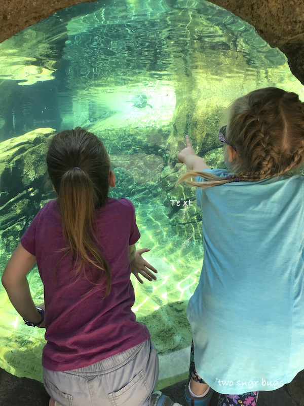 girls pointing at the penguins at the zoo