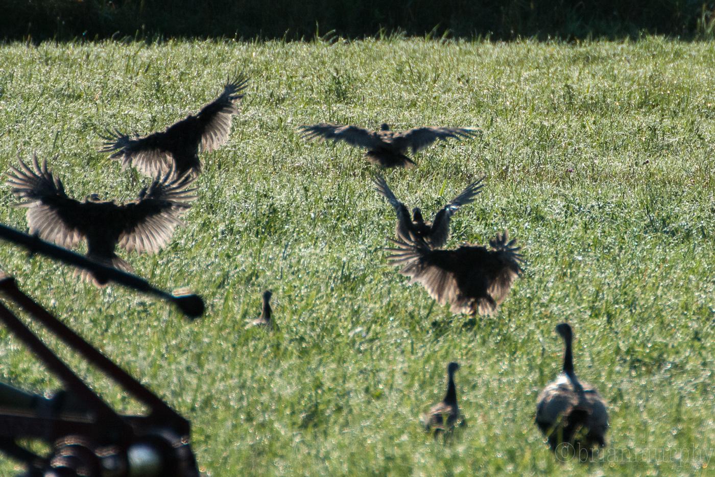 Ohio/Michigan Summer Birding