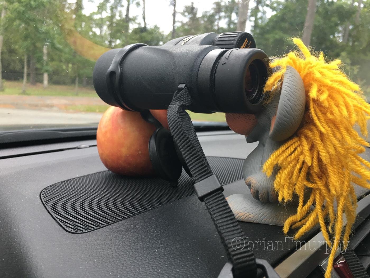 NC/SC Coastal Birding in September