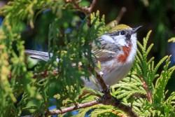 Bird Migration Peaks in Michigan's Upper Peninsula