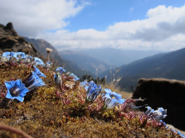These little blue flowers were all over the pass