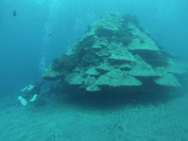 Coral Bomb