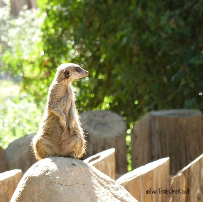 Zoo and AirShow April2016 143 - Copy