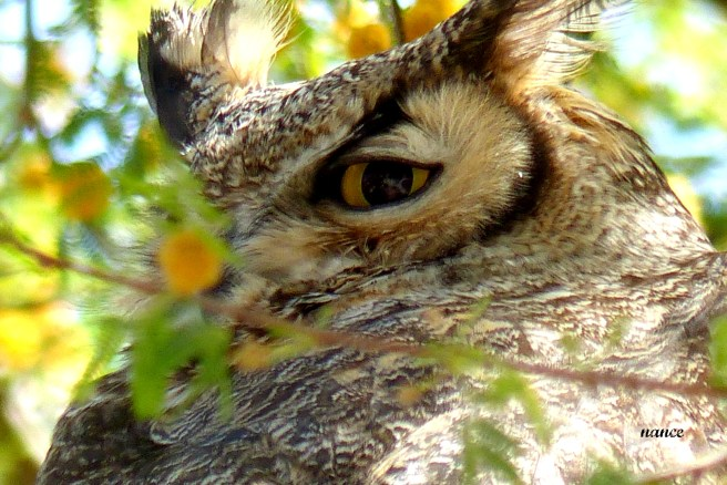 Owl1 012