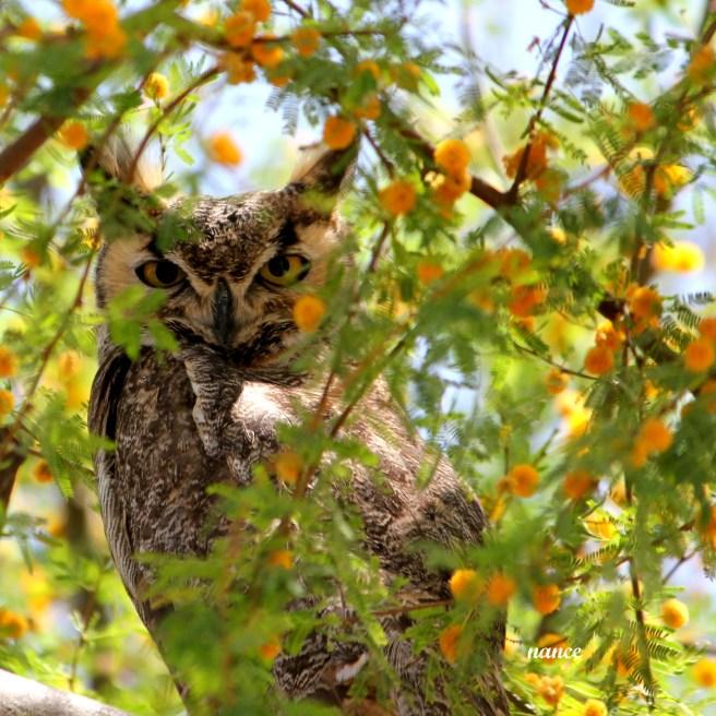 Owl2 013