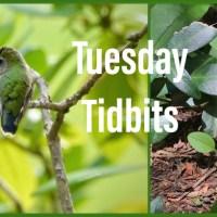 Tuesday Tidbits #138  A U G U S T