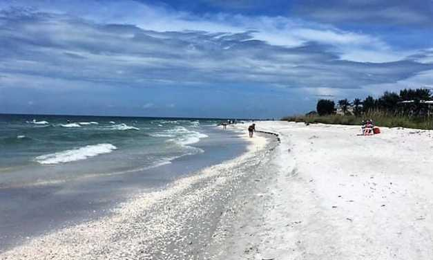 The Search for Sanibel Island Shells