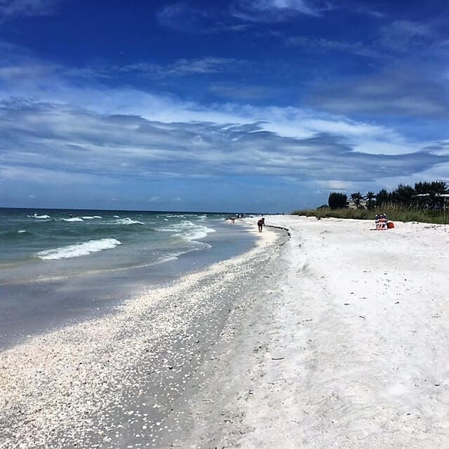 """Sanibel Island has some of the best shelling beaches in Florida if not the world! - - """"The Search for Sanibel Island Shells"""" - Two Traveling Texans"""