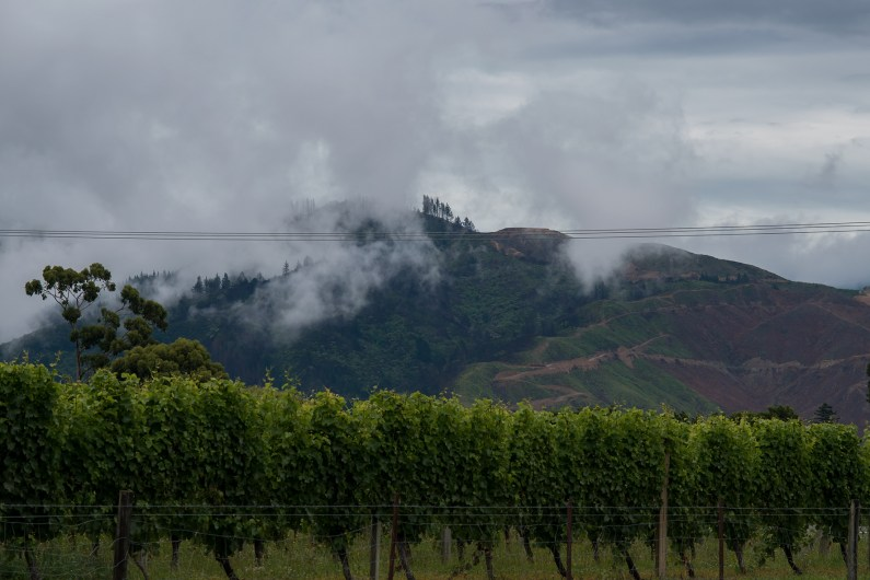 Malborough – one of NZs wineareas. Normally a lot of sunshine, but we discovered enormous clouds rising from the mountains.