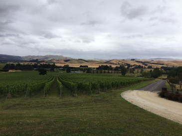 South of Kaikoura there's a some good soil for wines