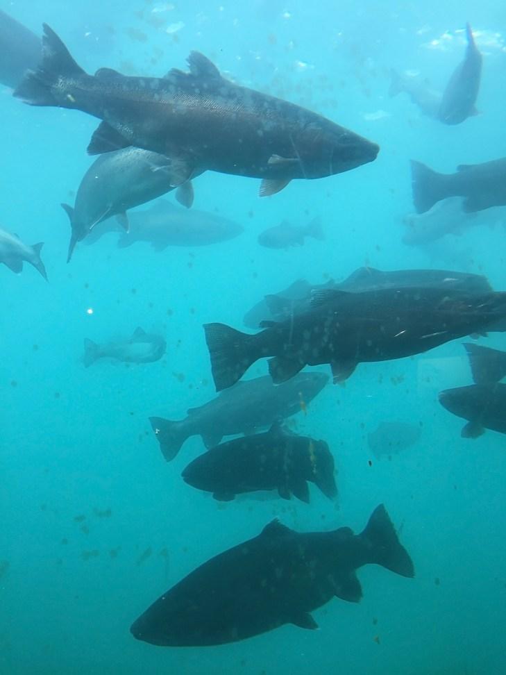 Underwater Viwepoint in Queenstown/Lake Wakatipu