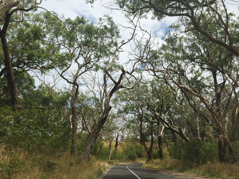 The Road to the Cape Otway Lightstation