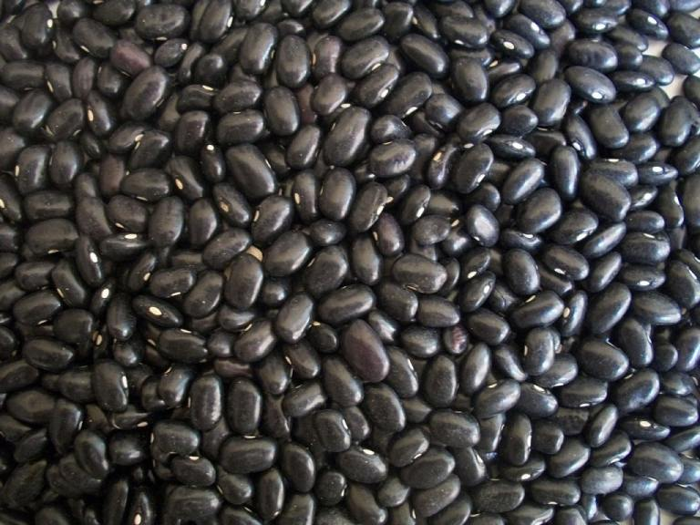 Black Beans from Michigan