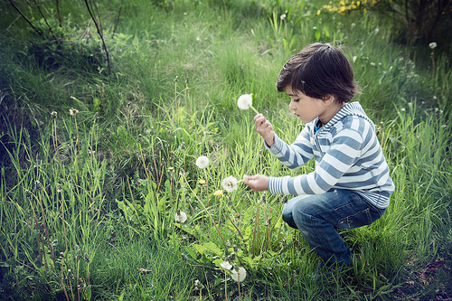child with dandelion photo